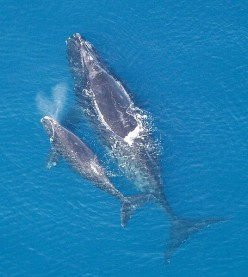 5 Extremely Rare Whales, Dolphins and Porpoises
