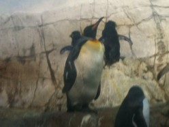 A Vacationers Review Of The Indianapolis Zoo
