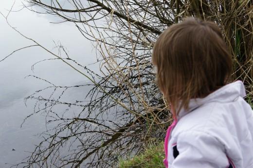 Examining nature