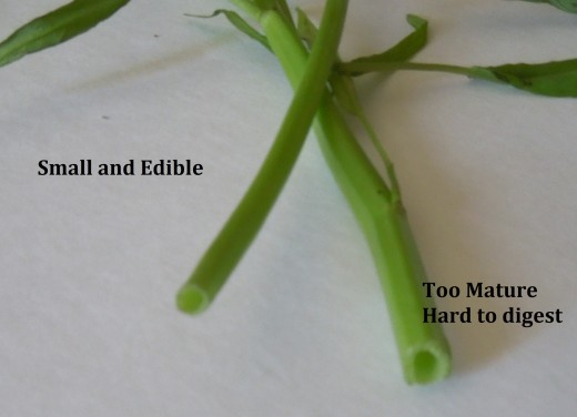 How to Select Ong Choy - Water Spinach