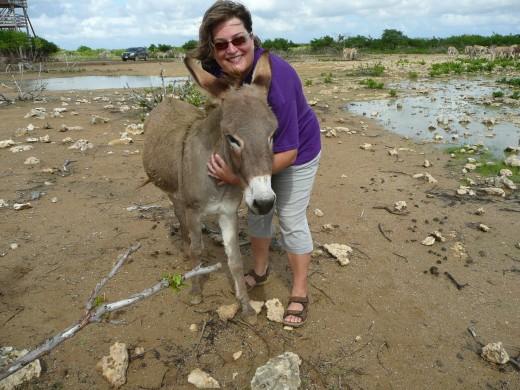 Hug-a-donkey!