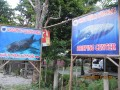 South of Cebu DIY (Day 3): The Tuki or Whale Shark of Oslob