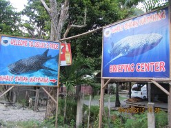 South of Cebu DIY (Day 3): The Tuki or Whale Shark of Oslob