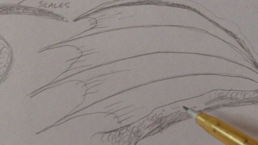 Finish the end of the wing with small arched lines and detailed wrinkles on the wing.