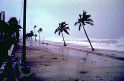 Hurricane Season Survival Tips