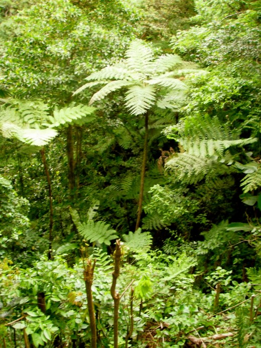 Tree ferns are ancient plants,  older than angiosperms.