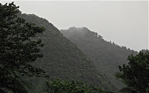 On the misted mountains, cloud forest grows.  In the rain forest, it rains a lot.