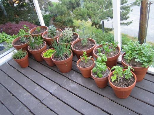 A great example of a nice patio herb garden. See? Scroll back up to the above picture, then scroll back down. Which one is more attractive?