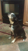 Turkey Sweet Potato Dog Treats Recipe For Older Dogs