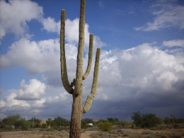 Arizona with threatened afternoon monsoon. Very hot, plenty humid. This a majestic saguaro cactus, likely two centuries old.