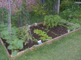 My first garden had better soil, was more defined (much neater!), and actually grew a few things.