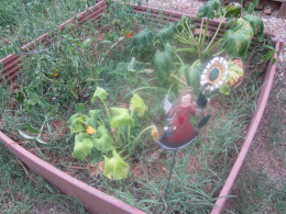 """My first raised garden bed did """"so well"""" that I added a second one. Here it is now, complete with weeds. Cute little metal garden angel, though!"""