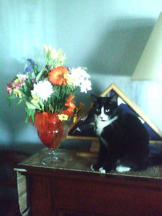 As you can see, Zorro is quite the discerning cat. He is quite partial to gourmet treats, fireplaces and flowers. (he is quite high maintenance as you can see)