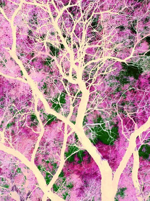 Tree Abstract, CopyrightFreePhotos CopyrightFreePhotos.HQ101.com