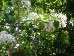A Diy Child's Flower Garden