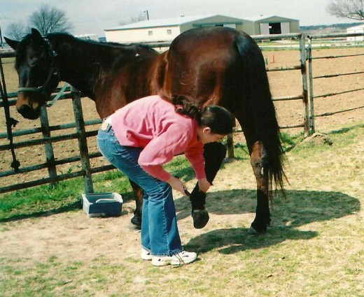 My daughter cleaning Henry's hooves, getting him ready to work at Riding Unlimited where she was a side-walker.
