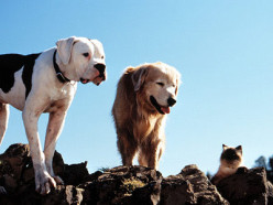 Movie Reviews: Homeward Bound