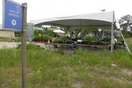 Texas Native Flower and Plant Sale - Lady Bird Johnson Wildflower Center  - Austin TX