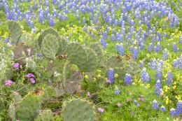 Nature trails - Lady Bird Johnson Wildflower Center  - Austin TX