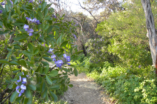 Nature Trails  - Lady Bird Johnson Wildflower Center  - Austin TX