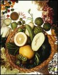 Food Stamps or SNAP - Supplemental Nutritional Assistance Program