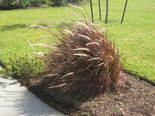Coastal winds blow these grasses
