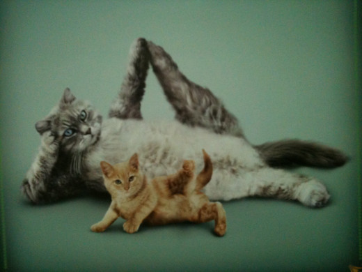 A Photo Taken by Quirinus,  of  the Yoga Cats Calendar
