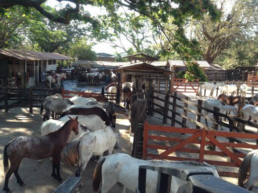 Working Ranch at Hacienda Gauchipelin