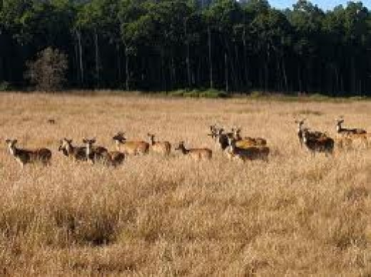 spotted deers roam around Jim Corbett National Park
