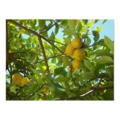 Lemon Souffle Recipe