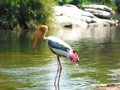 Bird Watching Tours - Kokkare Bellur