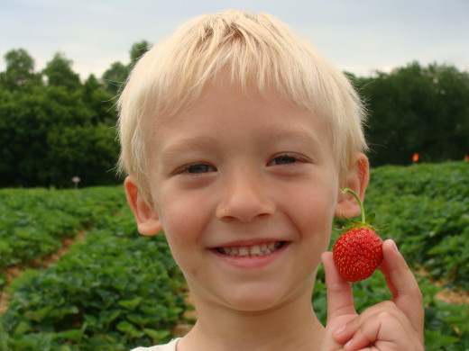 Strawberry picking is a great summer activity for families.
