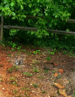 Squirrel eating bird seed.
