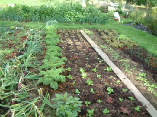 Make Money Growing Your Own Vegetables