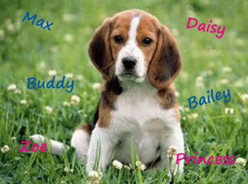 Dog names suggestions