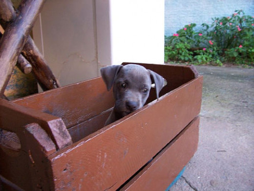 A crate is great for housebreaking.