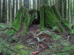 Entrance to the Faery Realm