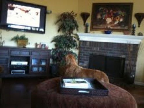Zeus takes a break from playing to watch DOGTV!