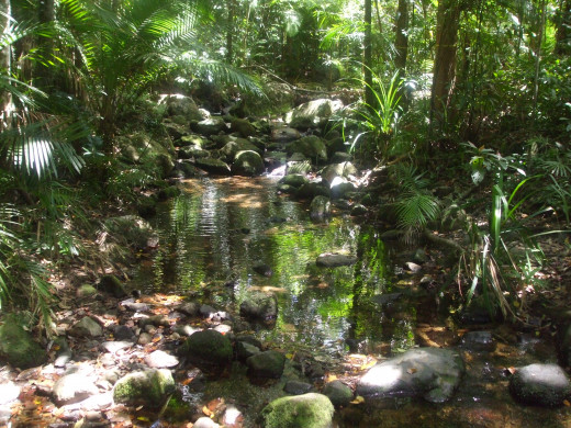 Tropical rainforest at Mossman Gorge