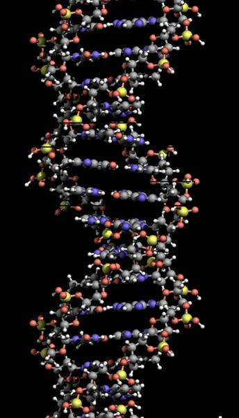 Chromosomes in a DNA strand make up all kinds of traits in the human body.
