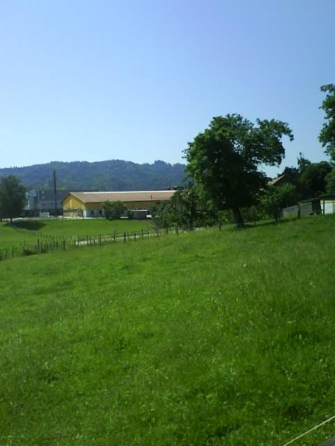 green fields, mountain behind