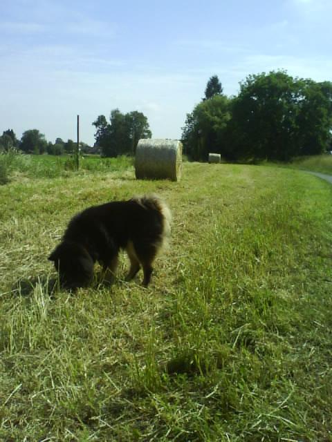 green field, dried grass harvest