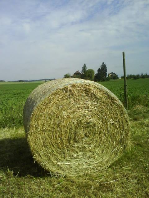 dried grass harvest