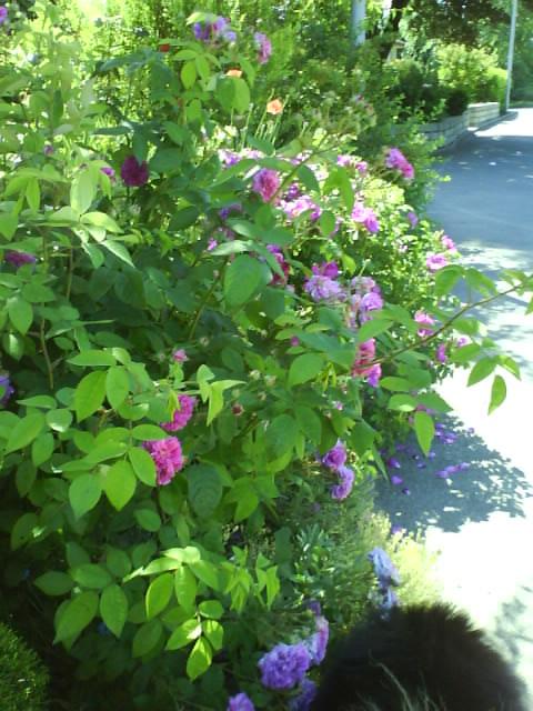 summer flowers around