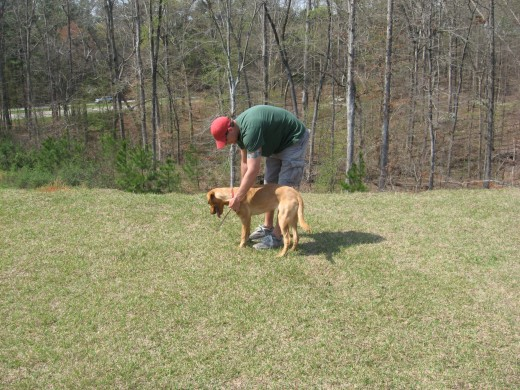 Like most dog training, it's best to start bird dog training early.