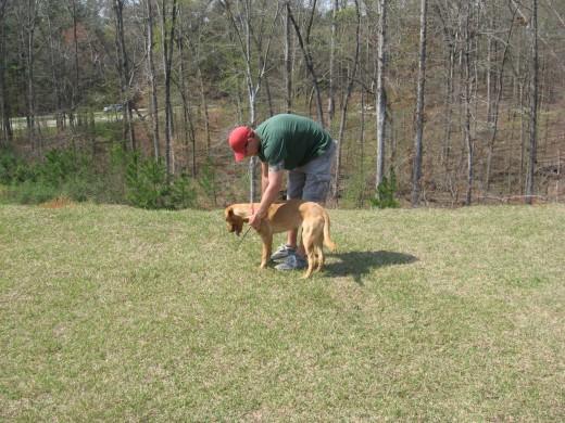 Like most dog training, it's best to start bird dog training early.