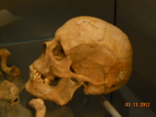 Skull of a man found buried on the site of the Roman Baths