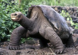 Lonesome George, the giant tortoise and symbol of the Galapagos Islands, dies at 100