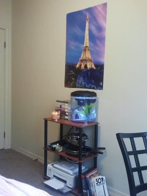 My 3.5 gallon aquarium setup. Simple, small and perfect. Photo Source: shanna11