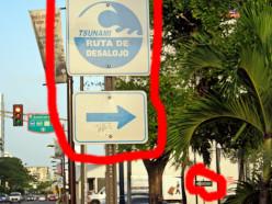 In Case Of Tsunami